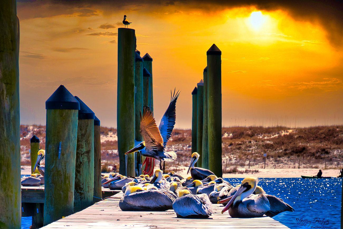 Pelican Pier