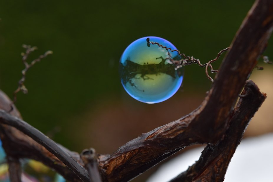 Just a quiet quarantine day in the winter garden playing with a rest of the summertime bubble sol...