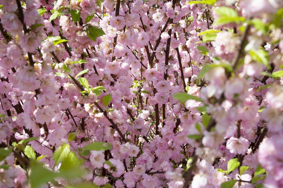 I really want spring