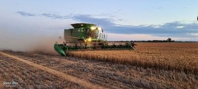 Evening Harvest
