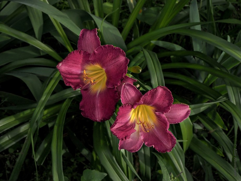 Flowers In Nature_3