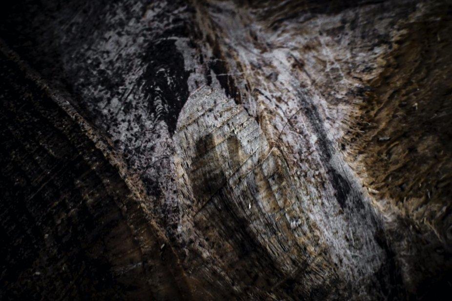 A close up of a tree stump.