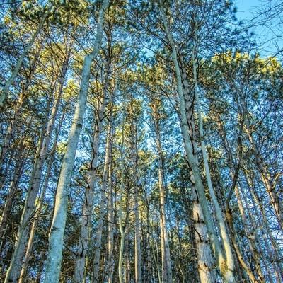 Tree top lighting