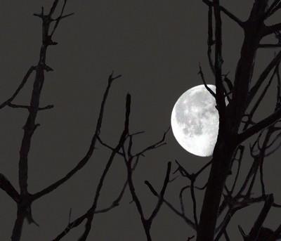 Dead Winter Moon