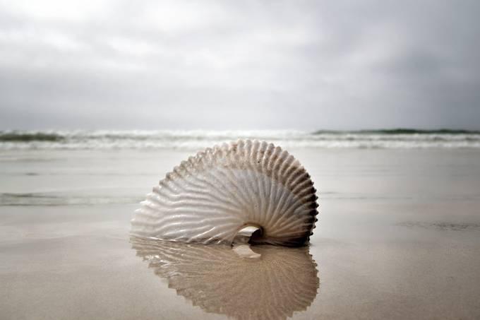 Nautilus Reflection