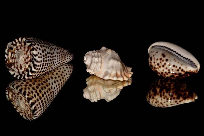 Reflecting Shells