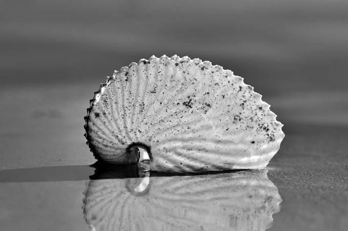 Nautilus Black and White