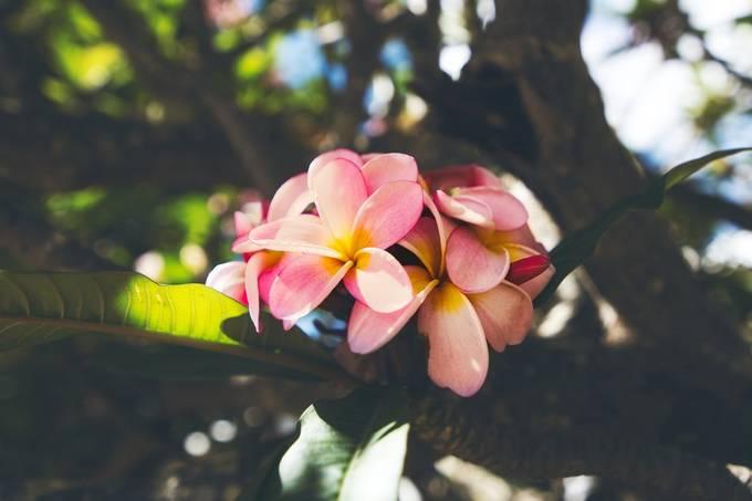 Matte effect flowers