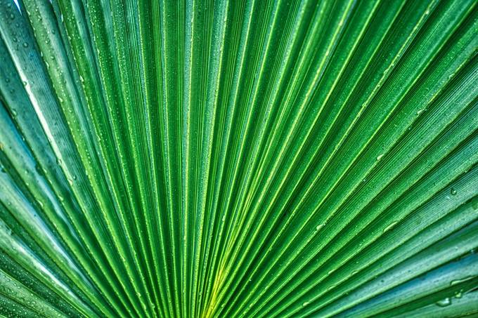 Leafy lines