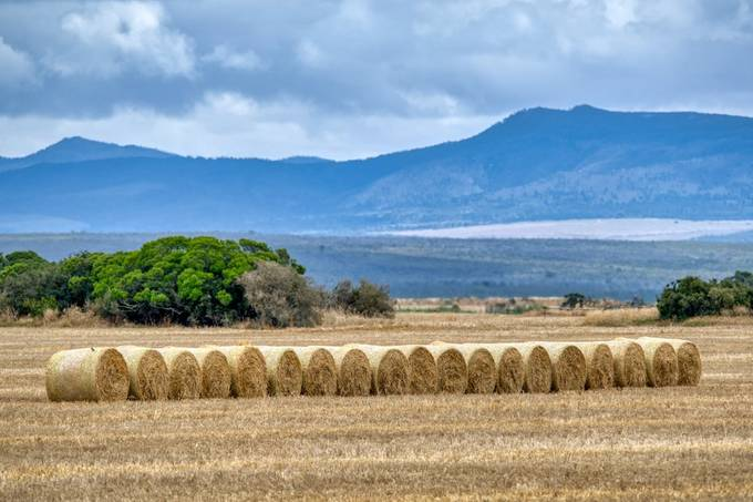 Bales in a row