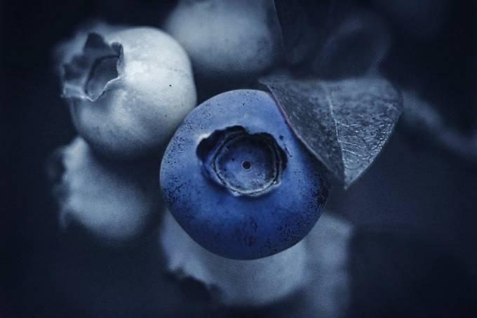 Blueberry dreams by Son_Ja - A Macro World Photo Contest