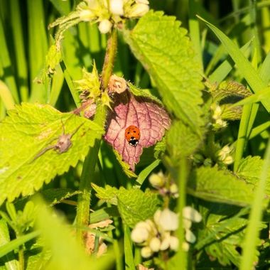 ladybird-8934