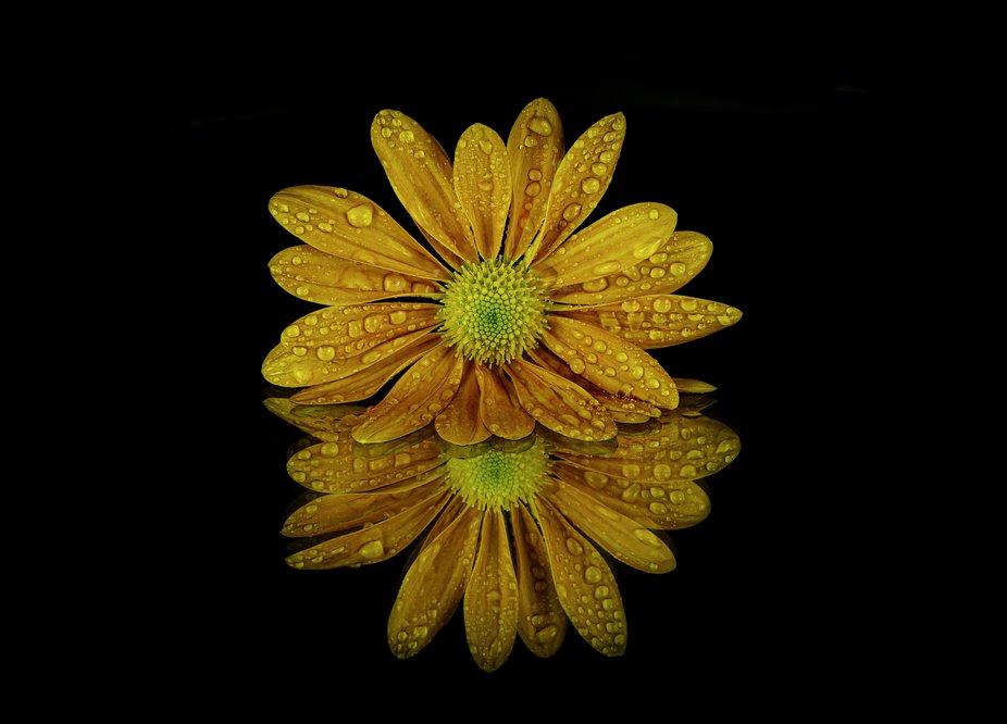 Orange flower droplet