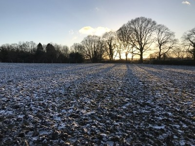 February Field - Late Afternoon