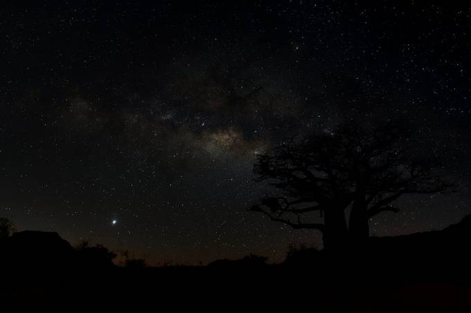 Baobab at night