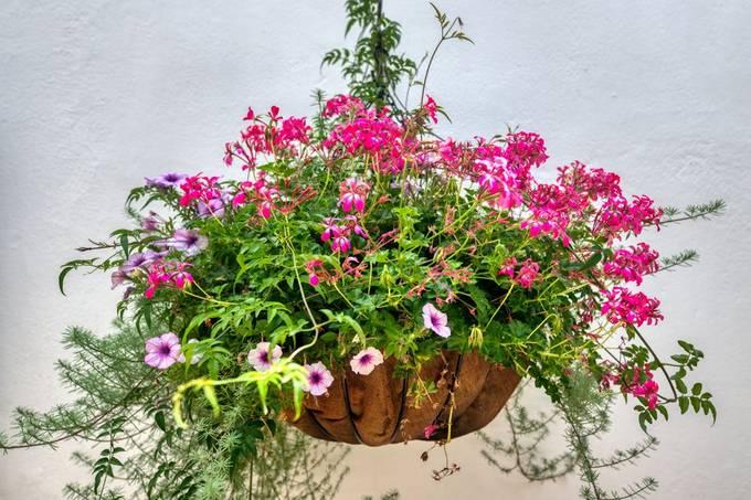 Hanging flowerbasket