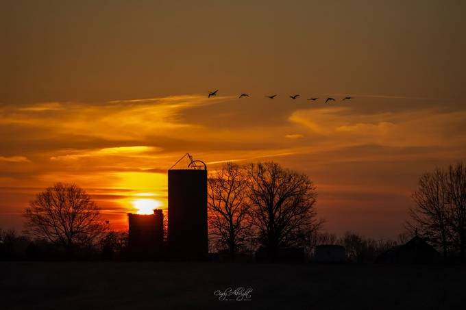 This March sunrise was just gorgeous, and then these geese flew past!  I was never so glad I had my camera with me and ready to shoot!  A wonderful way to welcome the coming of Spring!
