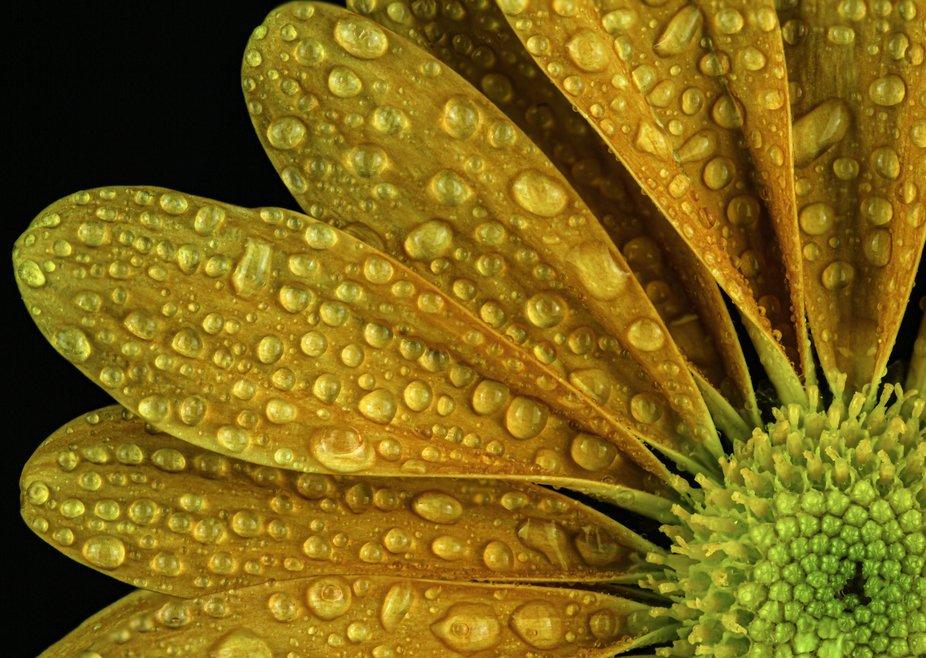 Orange flower texture