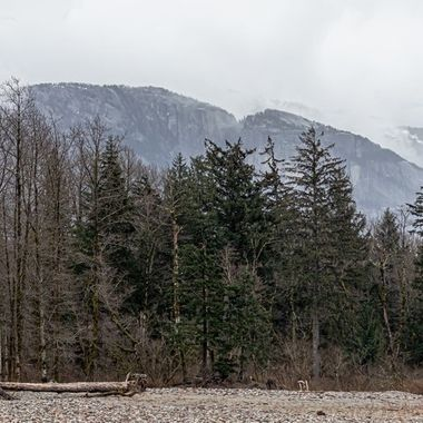 A well known monolith in my home town called the Stawamus Chief,