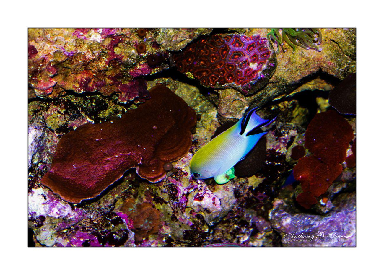 Fish Tank (9)