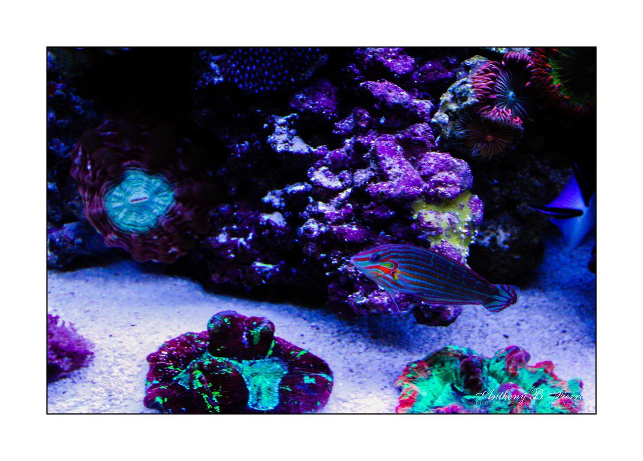 Fish Tank (10)