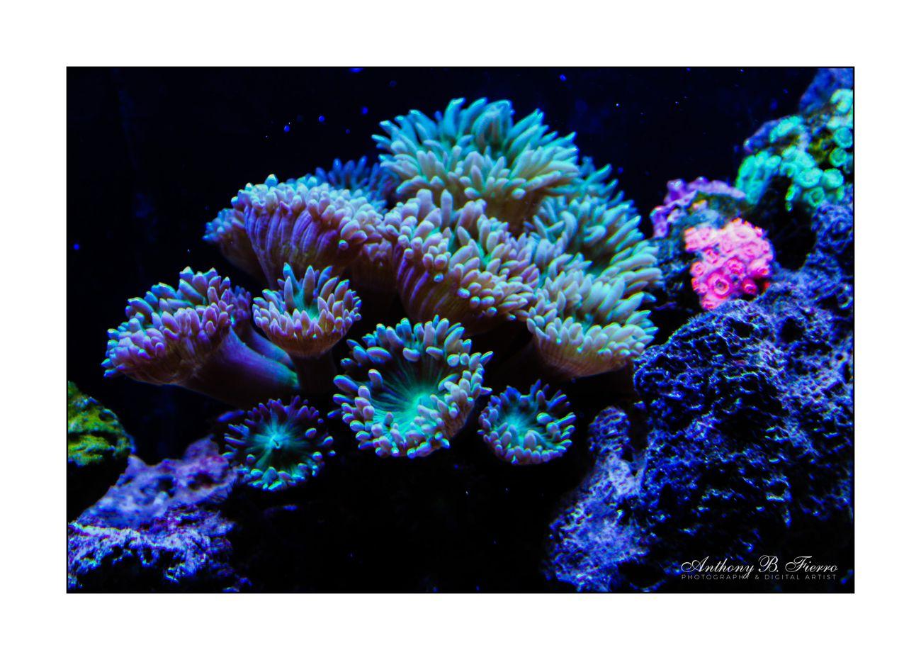 Fish Tank (11)
