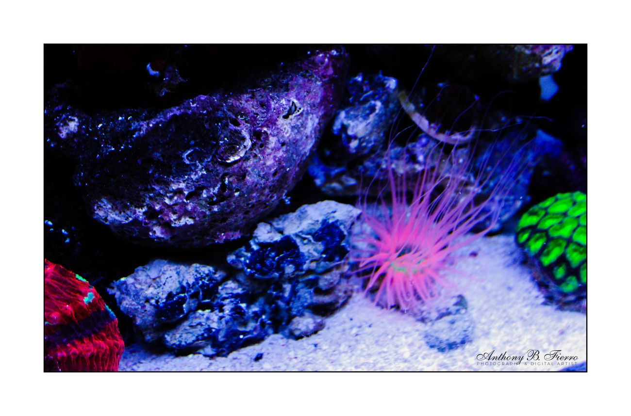 Fish Tank (12)