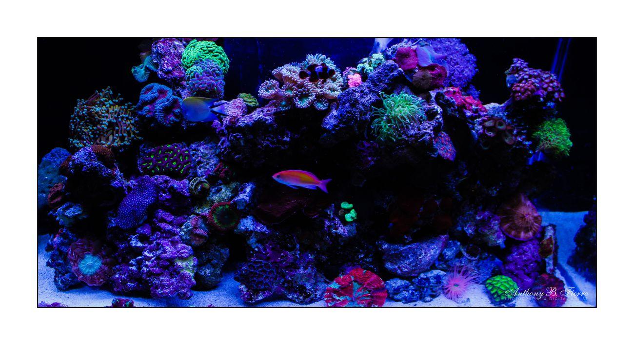 Fish Tank (13)