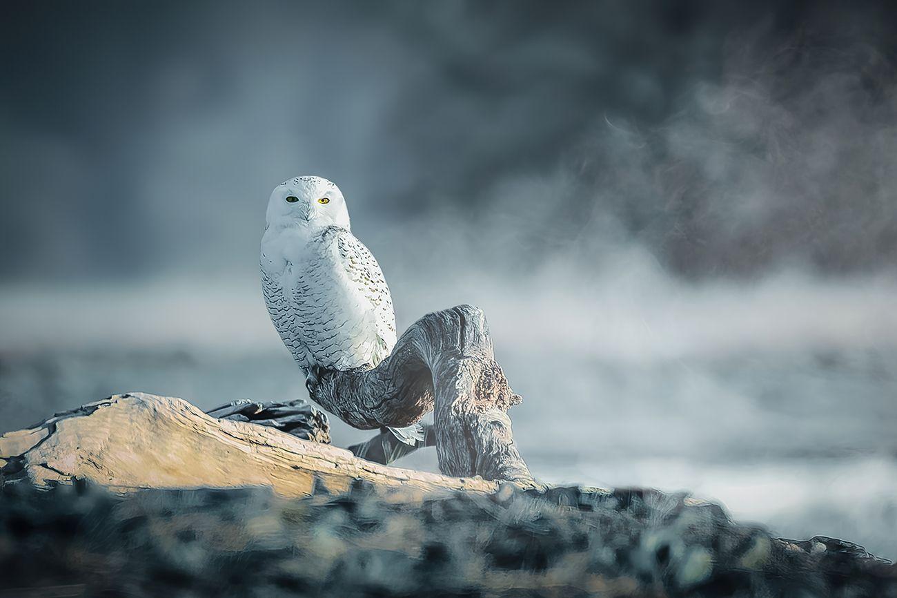 Animal Kingdom Photo Contest Winner