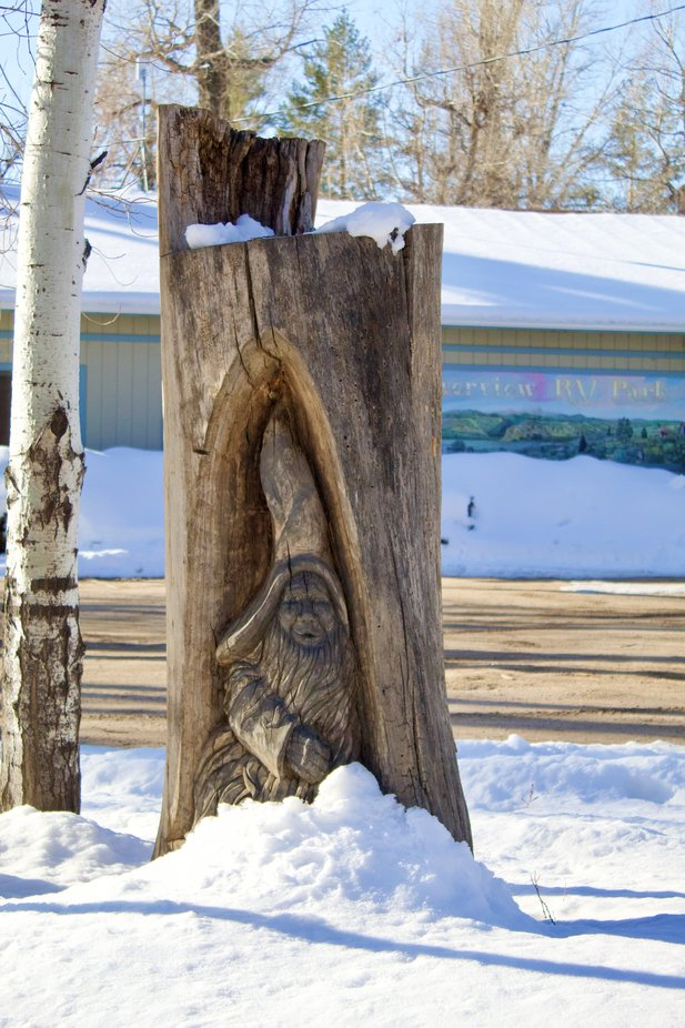 A little gnome carved into a cottonwood tree in Loveland, Colorado