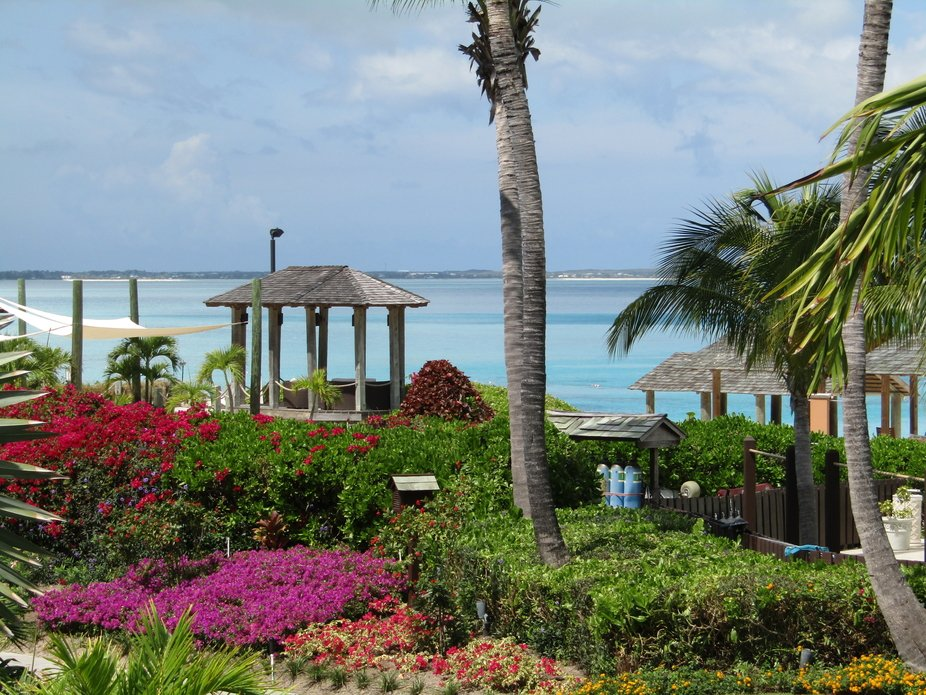 Taken at Turks and Caicos, Beaches Resort. Many palm trees, beautiful blue water and many beautif...