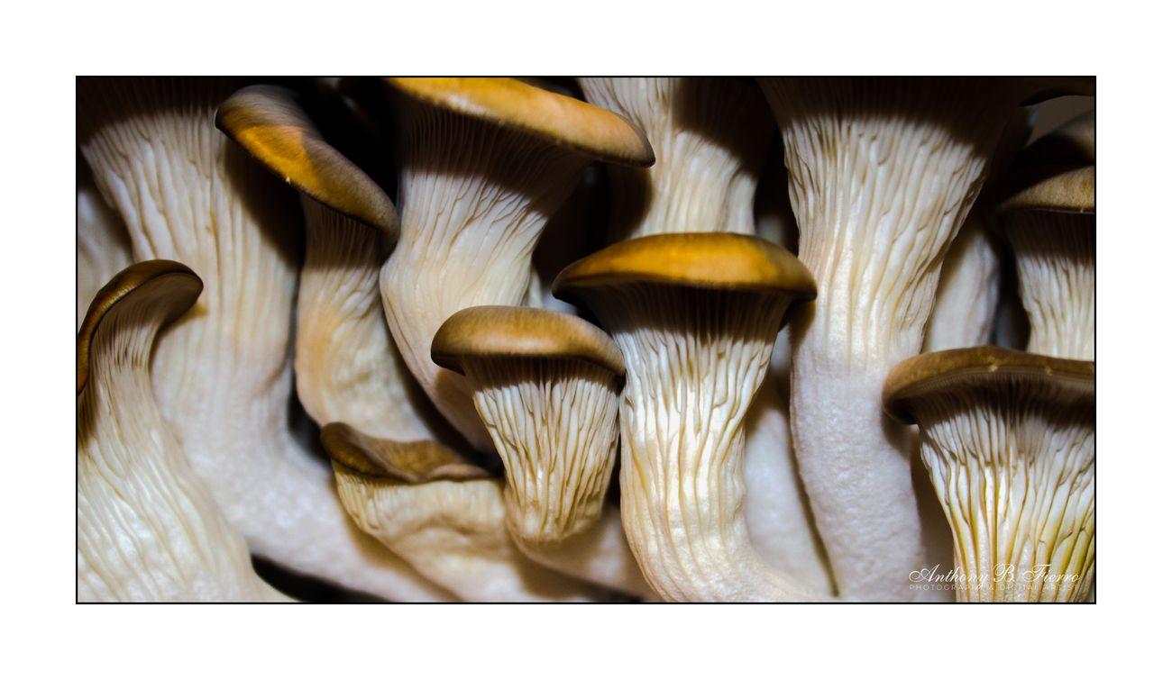Fungi (21)