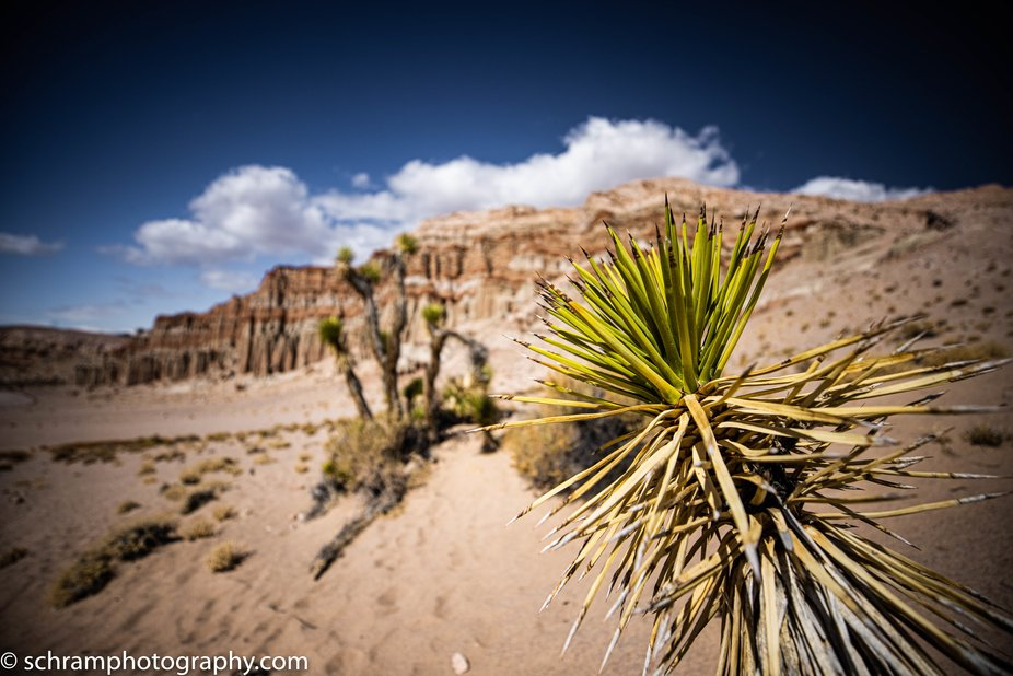 Red Rock Canyon CA