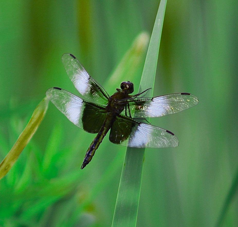 Dragonfly By Yannis Lobaina