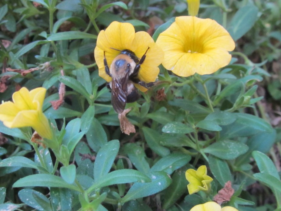 Had my camera ready and waited for the bumble bee to land.  Love this shot!