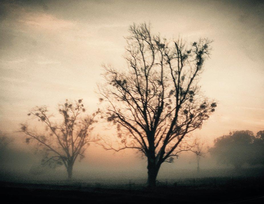 Foggy Georgia sunrise
