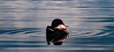 Duck_01
