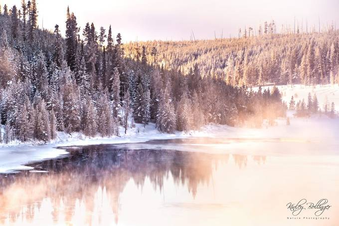 Magical mornings in Yellowstone will always hold a special place in my heart.
