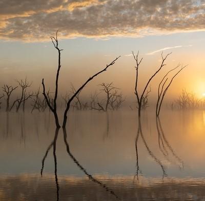 Lake of Dead Trees series