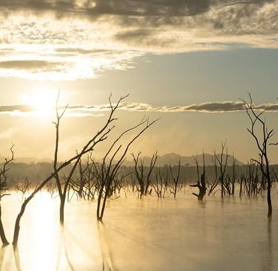 Lake of Dead Tree series