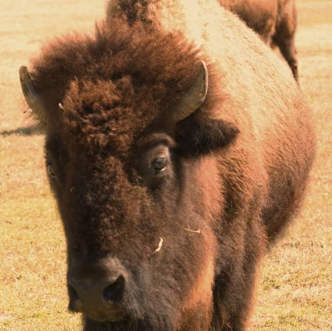 Buffalo_HDR1760