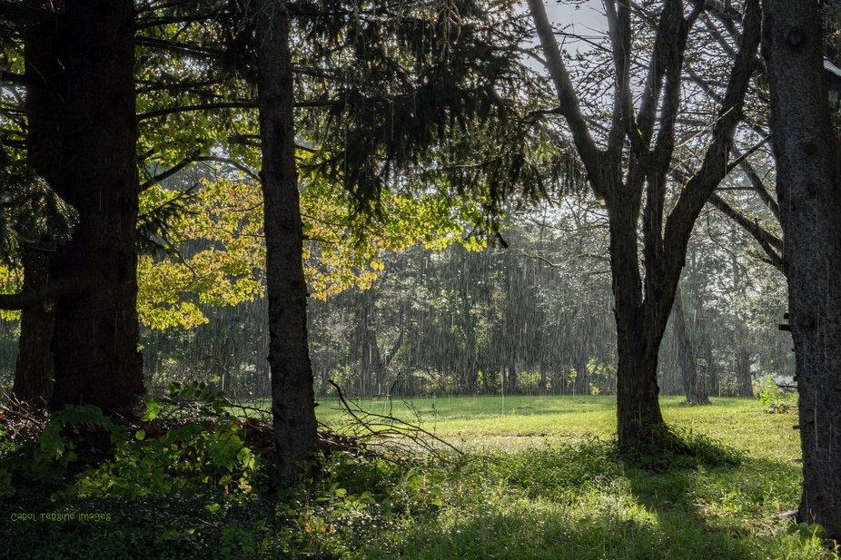 DSC05504 Heavy Summer Rain