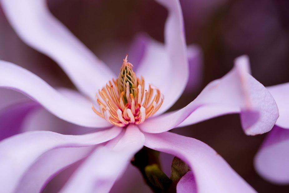 Flower blossom - spring