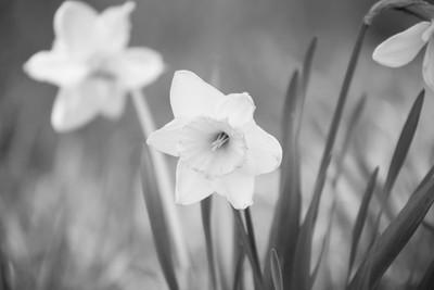 beauty of black&white