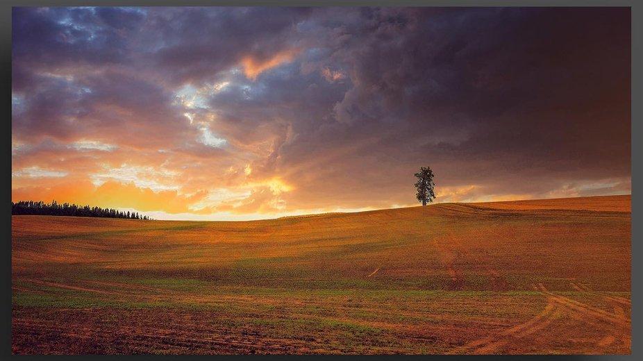 A Tree in the Plowed Wheat Field of the  Palouse—————————————#palousewa...