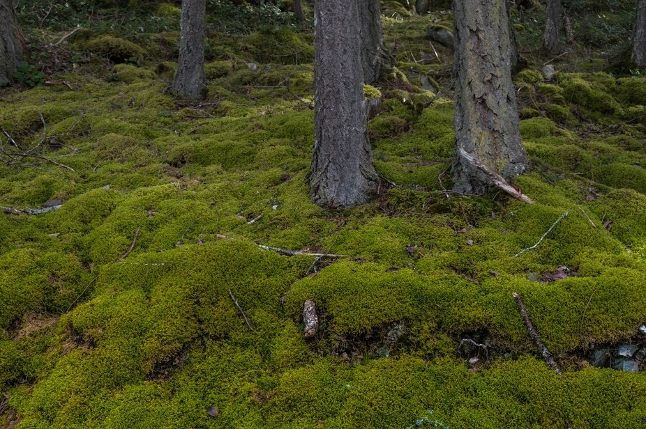 The vivid mossy slopes at this time of year make me think of trolls.:)