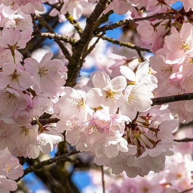 A close look at some blossoms
