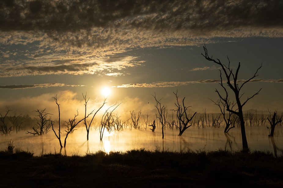 Lake of dead trees