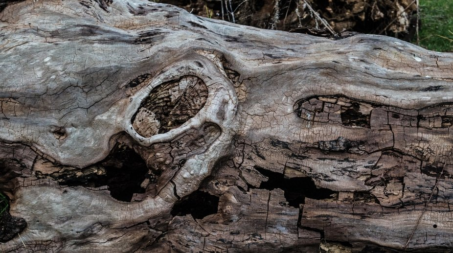 Yes, it is just an old log lying on the ground and easy to pass by in the search for the colourfu...