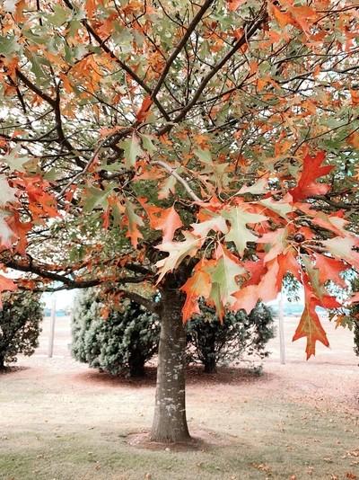 Autumn Tints Aotearoa